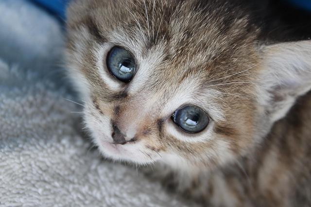 vykulené kotě