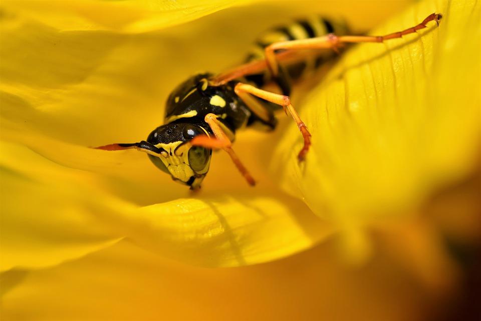 vosa na listě